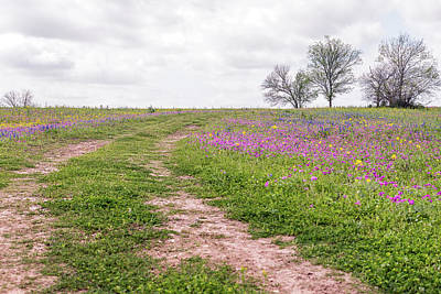Photograph - Texas Wildflowers 3 by Victor Culpepper