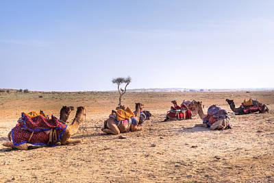 Camel Photograph - Thar Desert - India by Joana Kruse