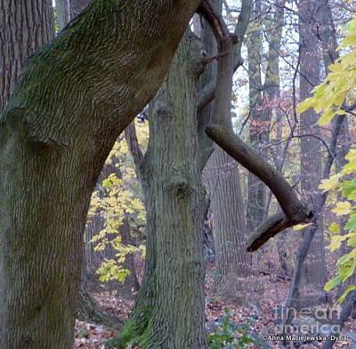 Folkartanna Photograph - Trees I Love 18 by Anna Folkartanna Maciejewska-Dyba