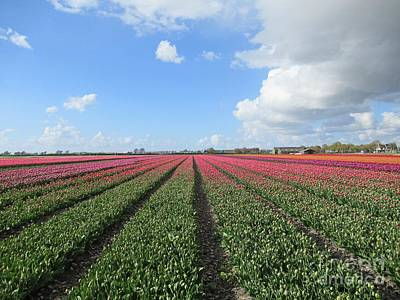 Photograph - Tulips In Warmenhuizen by Chani Demuijlder