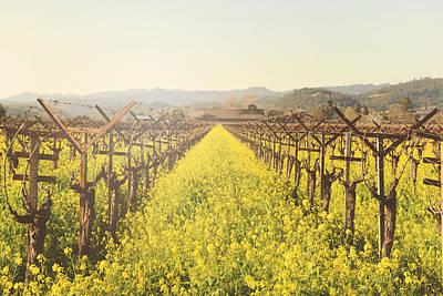 Vineyard In Spring With Vintage Instagram Film Style Filter Art Print by Brandon Bourdages