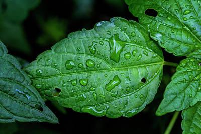 Photograph - Wet Leaves by Robert Ullmann