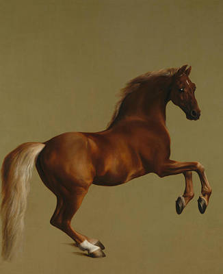 18th Century Painting - Whistlejacket by George Stubbs