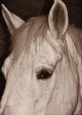 Photograph - White Grey Companion by JAMART Photography