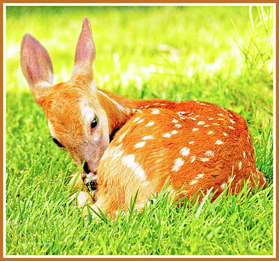 Photograph - White-tailed Deer Fawn by A Gurmankin