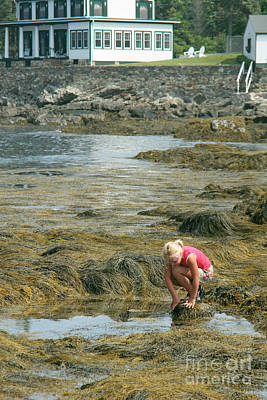 Young Girl Exploring A Maine Tidepool Art Print by Ted Kinsman