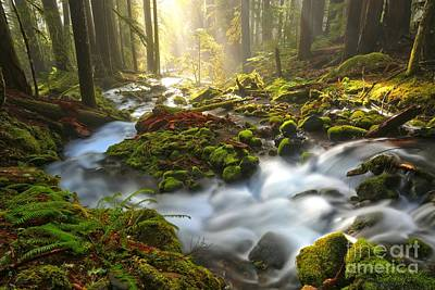 Photograph - Olympic National Park Zen by Adam Jewell