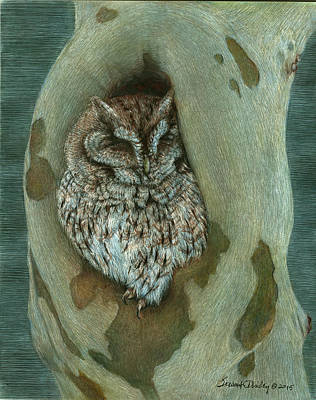 Drawing - 40 Winks Before Nightshift - Eastern Screech Owl by Susan Donley