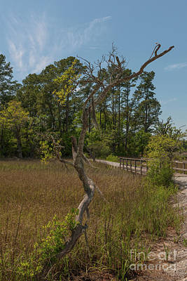 Photograph - Marshland Path by Dale Powell