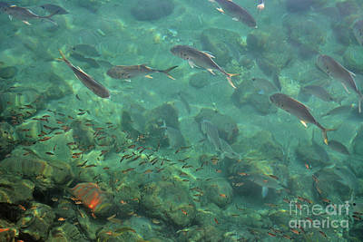 Photograph - 41- A Natural Aquarium by Joseph Keane