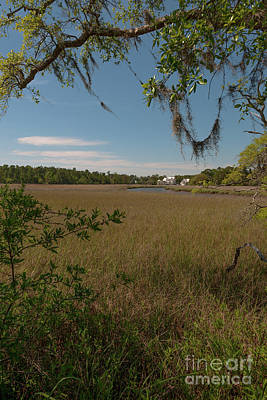 Photograph - Salt Marsh Living by Dale Powell
