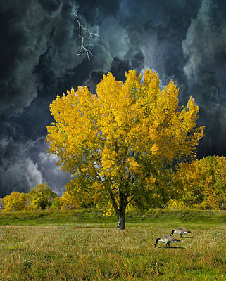 Photograph - 4161 by Peter Holme III