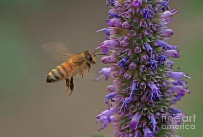 Purple Photograph - Honeybee by Gary Wing