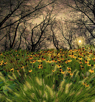 Photograph - 4209 by Peter Holme III