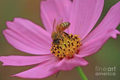 Photograph - Honeybee by Gary Wing