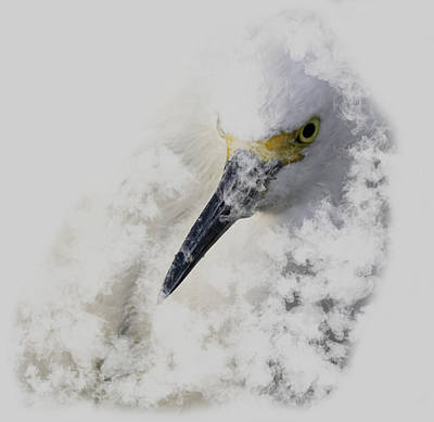 Print featuring the photograph 4386 by Peter Holme III