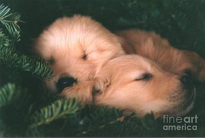 #439 25 Golden Retrievers Sleeping In Wreath Sweet Dreams Original by Robin Lee Mccarthy Photography