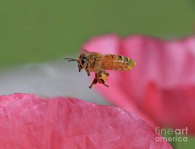 Nature Photograph - Honeybee by Gary Wing