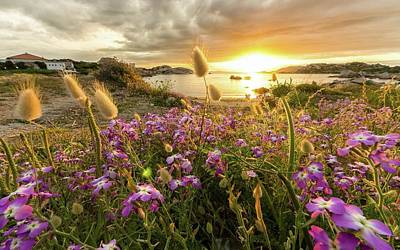 Summer Digital Art - Sunset by Super Lovely