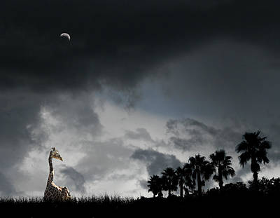 Photograph - 4458 by Peter Holme III