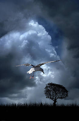 Photograph - 4472 by Peter Holme III