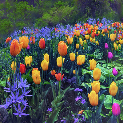 Photograph - Procession Of Tulips by Jessica Jenney