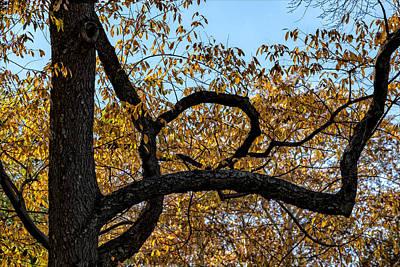 Nirvana - Fall Foliage by Robert Ullmann