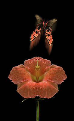 Photograph - 4585 by Peter Holme III