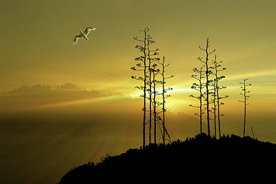 Photograph - 4587 by Peter Holme III