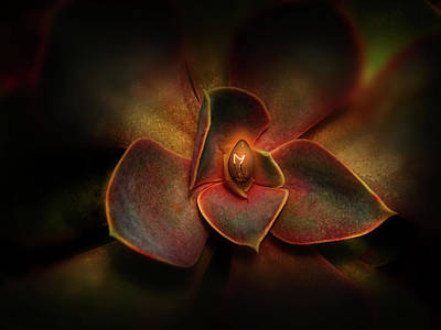 Photograph - 4589 by Peter Holme III