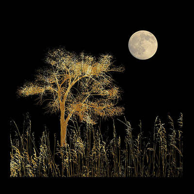 Photograph - 4591 by Peter Holme III