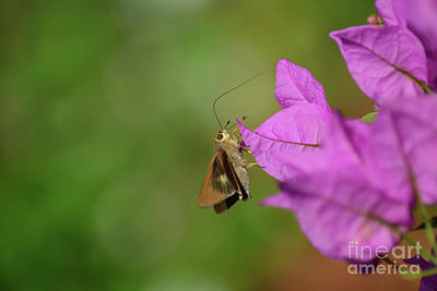 Photograph - 46- Skipper Butterfly by Joseph Keane