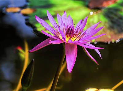 Photograph - Water Lily by Robert Ullmann