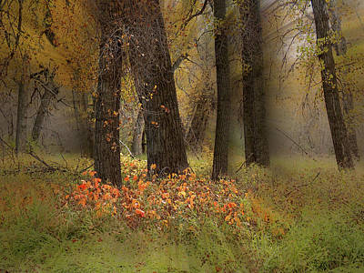 Photograph - 4607 by Peter Holme III