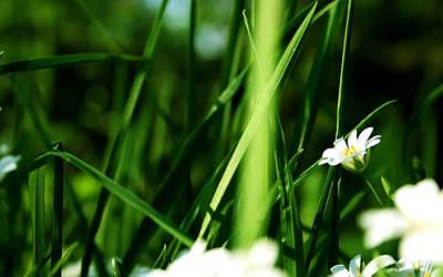 Summer Digital Art - Flower by Super Lovely