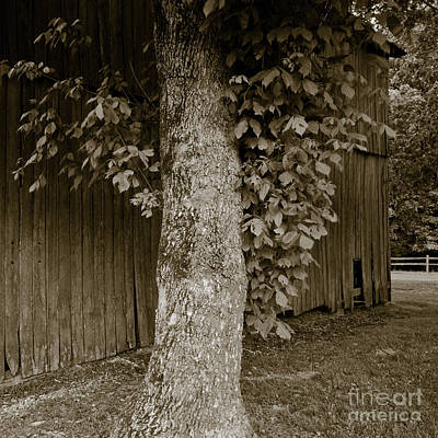 Photograph - Tennessee Country by Avril Christophe