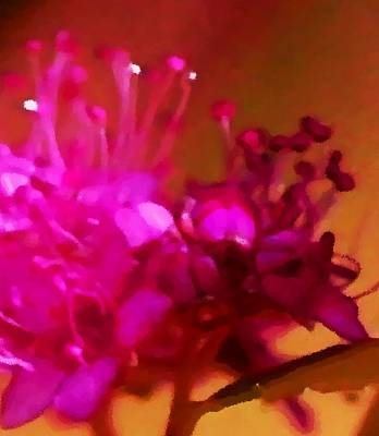 Digital Art - Spirea 4741 Magenta by Ajp