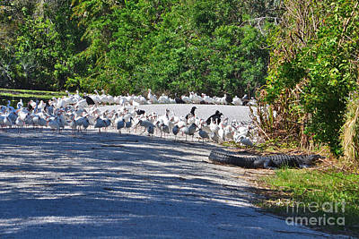 Photograph - 48- Everglades Afternoon by Joseph Keane