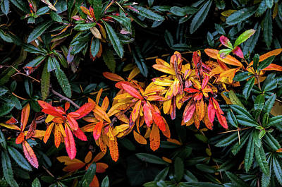 Photograph - Fall Leaves by Robert Ullmann