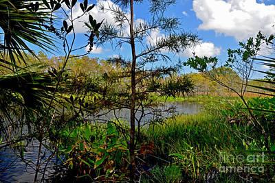 Photograph - 49- Florida Everglades by Joseph Keane