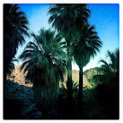 Desert Photograph - 49 Palms Oasis. Have You Ever Been To by Alex Snay