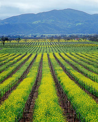 Photograph - 4b6339 Rows Of Vineyards In Spring by Ed Cooper Photography
