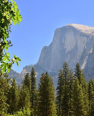 Photograph - 2017 Yosemite Late Spring by Dean Ferreira