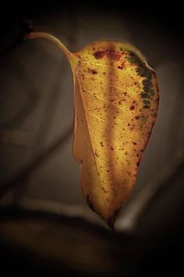 Photograph - Autumn Leaf..... by Phyllis Meinke