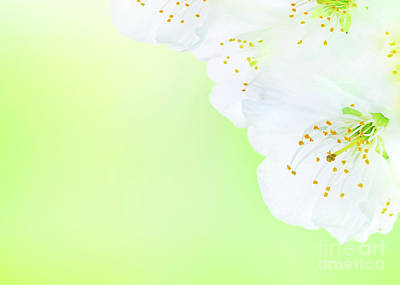 Photograph - Beautiful Blooming Spring Flowers by Anna Om