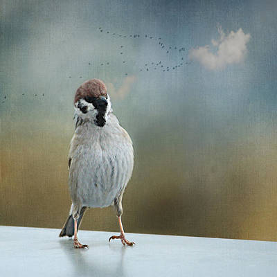 Animales Photograph - Birds by Heike Hultsch