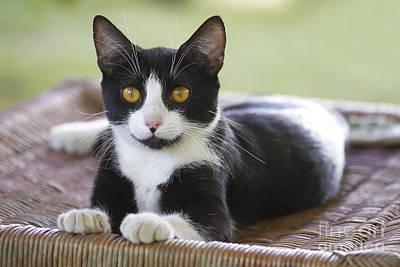 Black & White Cat Art Print by Jean-Michel Labat