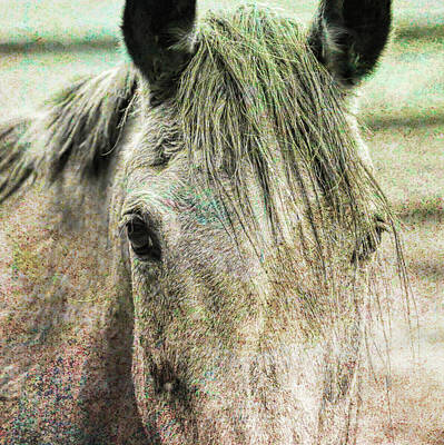 Photograph - Buckskin by JAMART Photography