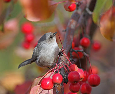 Berries Photograph - Bushtit by Gary Wing