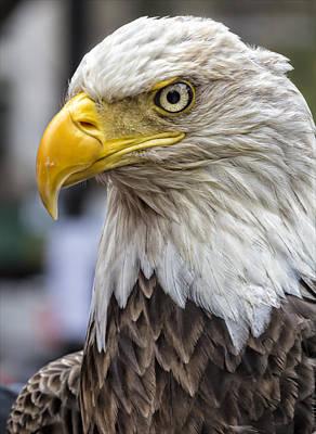 Challenger The Bald Eagle Art Print